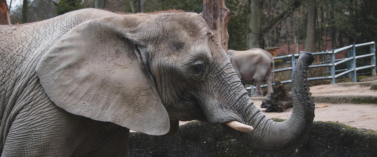 Düsseldorf Ausflug Zoo Wuppertal DriveNow Carsharing